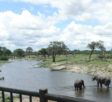Get back to nature in Botswana, a refuge for animal lovers.