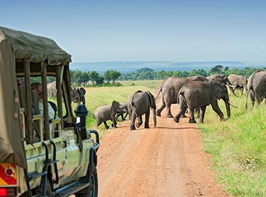 Plan an affordable African Safari